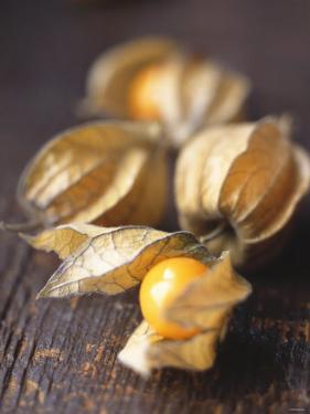 Four Cape Gooseberries (Physalis) by Philip Webb