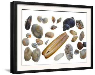 Collection of Shells by Philippe Clement