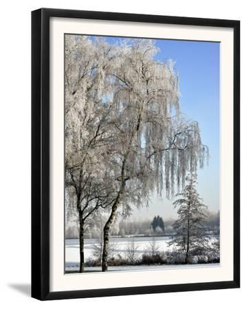 Frozen Pond in Park Landscape with Birch Trees Covered in Hoarfrost, Belgium