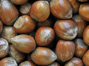 Hazelnuts, Belgium by Philippe Clement