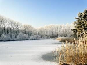 Hoarfrost Covered Trees Along Frozen Lake in Winter, Belgium by Philippe Clement