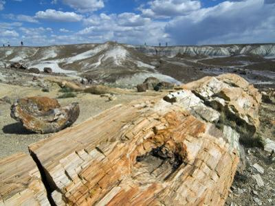 Petrified Logs Exposed by Erosion, Painted Desert and Petrified Forest, Arizona, Usa May 2007