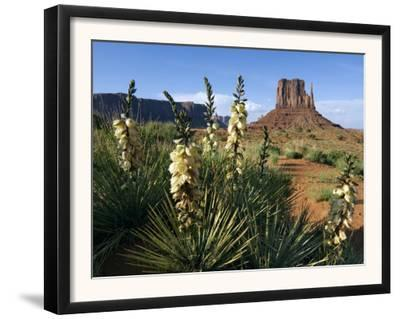 Soapweed Yucca. Monument Valley Navajo Tribal Park, Arizona, Usa 2007 by Philippe Clement