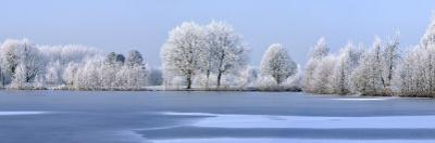 Trees Covered in Hoarfrost Beside Frozen Lake in Winter, Belgium