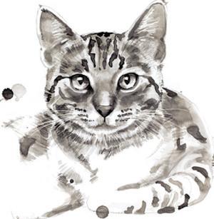 Cat by Philippe Debongnie