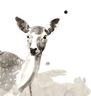 Deer by Philippe Debongnie