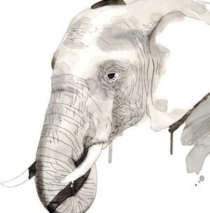 Elephant by Philippe Debongnie