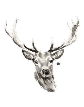 Elk by Philippe Debongnie
