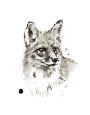 Fox by Philippe Debongnie