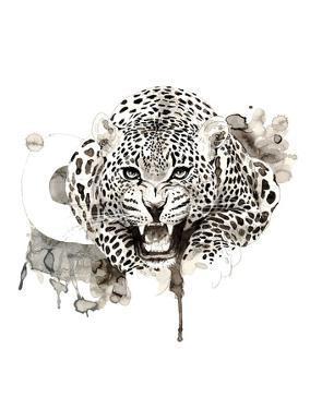 Leopard by Philippe Debongnie
