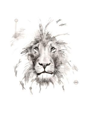 Lion by Philippe Debongnie