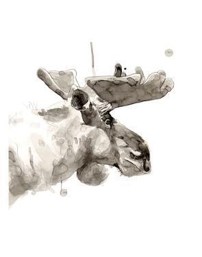 Moose by Philippe Debongnie