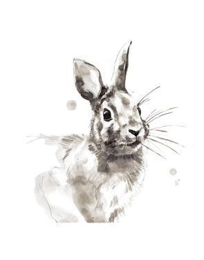 Rabbit by Philippe Debongnie