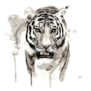 Tiger by Philippe Debongnie