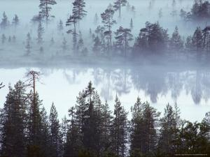 Lake at Dawn in the Mist, Kuusamo Area, Northeast Finland by Philippe Henry