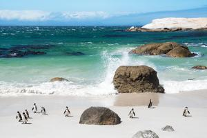Awesome South Africa Collection - African Penguins at Boulders Beach VI by Philippe Hugonnard