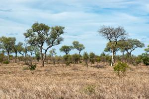 Awesome South Africa Collection - African Savannah by Philippe Hugonnard