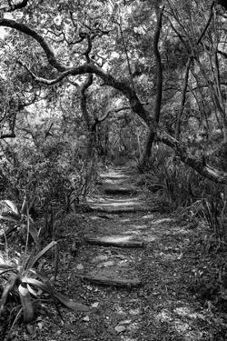 Awesome South Africa Collection B&W - African Forest by Philippe Hugonnard