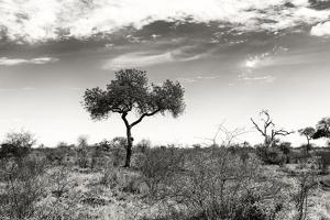 Awesome South Africa Collection B&W - African Landscape XIII by Philippe Hugonnard