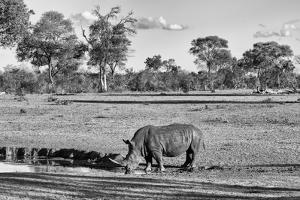 Awesome South Africa Collection B&W - Black Rhinoceros by Philippe Hugonnard