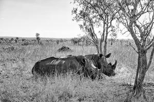 Awesome South Africa Collection B&W - Two White Rhinoceros I by Philippe Hugonnard