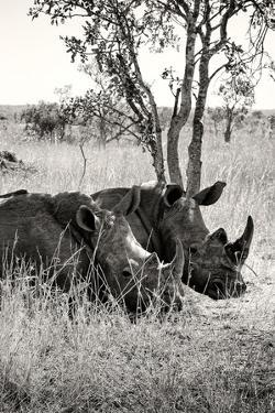 Awesome South Africa Collection B&W - Two White Rhinoceros II by Philippe Hugonnard