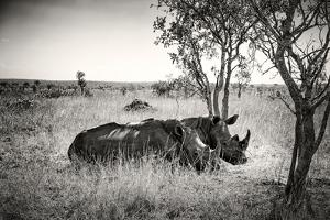 Awesome South Africa Collection B&W - Two White Rhinoceros by Philippe Hugonnard