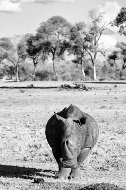 Awesome South Africa Collection B&W - White Rhino by Philippe Hugonnard