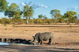 Awesome South Africa Collection - Black Rhinoceros and Savanna Landscape by Philippe Hugonnard