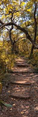 Awesome South Africa Collection Panoramic - African Forest Fall Colors II by Philippe Hugonnard