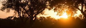 Awesome South Africa Collection Panoramic - African Sunrise Trees by Philippe Hugonnard