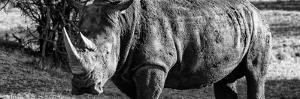 Awesome South Africa Collection Panoramic - Black Rhino B&W II by Philippe Hugonnard