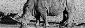 Awesome South Africa Collection Panoramic - Black Rhino B&W III by Philippe Hugonnard