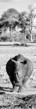 Awesome South Africa Collection Panoramic - Black Rhino B&W by Philippe Hugonnard