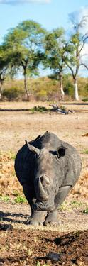 Awesome South Africa Collection Panoramic - Black Rhino by Philippe Hugonnard