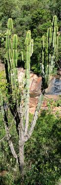 Awesome South Africa Collection Panoramic - Cactus by Philippe Hugonnard