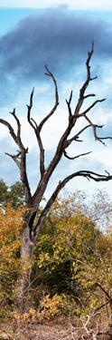 Awesome South Africa Collection Panoramic - Dark Tree II by Philippe Hugonnard