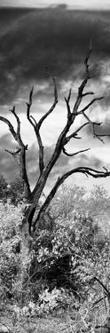 Awesome South Africa Collection Panoramic - Dark Tree by Philippe Hugonnard