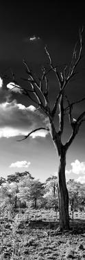 Awesome South Africa Collection Panoramic - Dead Tree in the Savannah B&W by Philippe Hugonnard