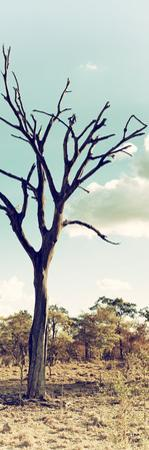 Awesome South Africa Collection Panoramic - Dead Tree in the Savannah II by Philippe Hugonnard