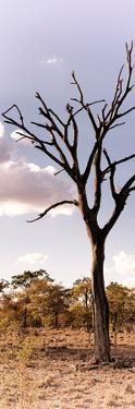 Awesome South Africa Collection Panoramic - Dead Tree in the Savannah by Philippe Hugonnard
