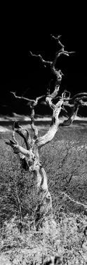 Awesome South Africa Collection Panoramic - Dead Tree by Philippe Hugonnard
