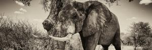Awesome South Africa Collection Panoramic - Male African Elephant II by Philippe Hugonnard
