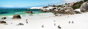 Awesome South Africa Collection Panoramic - Penguins at Boulders Beach II by Philippe Hugonnard