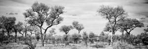 Awesome South Africa Collection Panoramic - Savanna Landscape B&W by Philippe Hugonnard