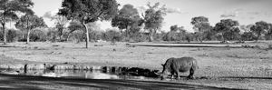 Awesome South Africa Collection Panoramic - Savannah Landscape with Rhino B&W by Philippe Hugonnard