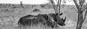 Awesome South Africa Collection Panoramic - Two White Rhinos I by Philippe Hugonnard