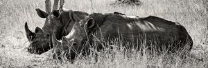 Awesome South Africa Collection Panoramic - Two White Rhinos II by Philippe Hugonnard