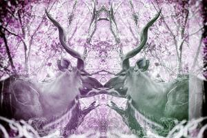 Awesome South Africa Collection - Reflection of Greater Kudu - Purple & Grey by Philippe Hugonnard