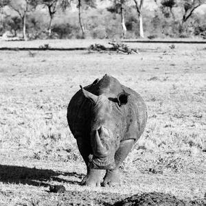 Awesome South Africa Collection Square - Black Rhino B&W by Philippe Hugonnard